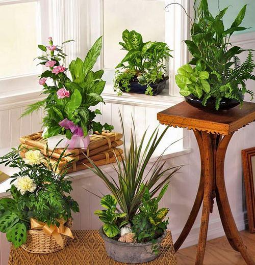Растения для зимнего сада в квартире