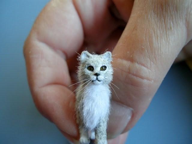 Малюсенький котенок ростом с мизинец фото, кучерявую шалаву трахают