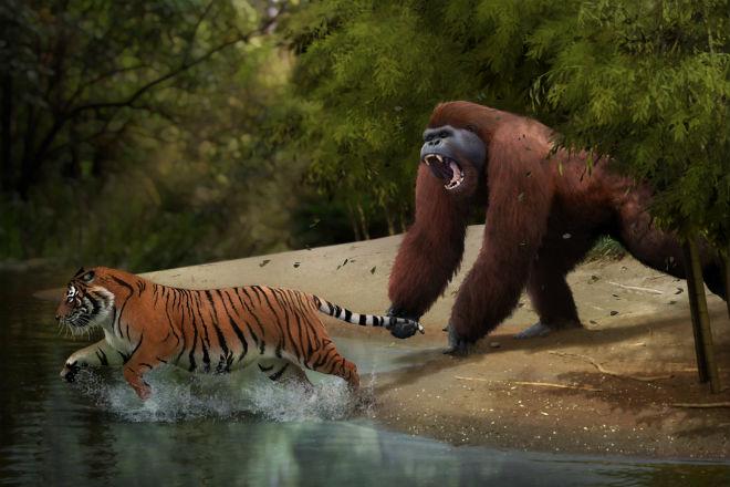Гигантопитек: царь обезьян, который мог положить гориллу одной левой