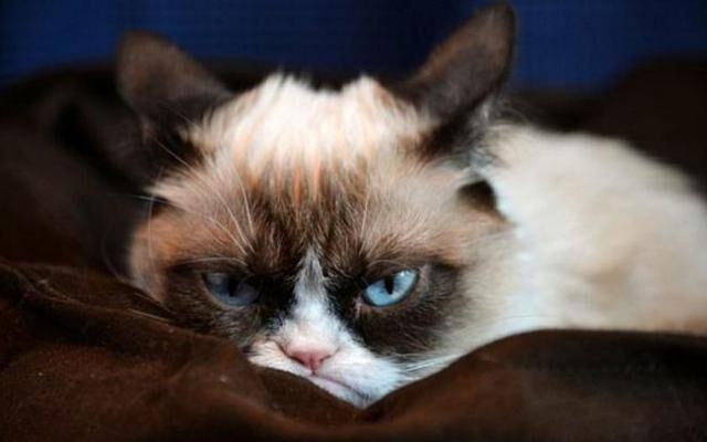 Как выглядит обижулька: 25 животных только, вообще, обидели, друзья, легко, обиды…15, неделю, целую, простила…14, надейся, кота…13, хорошего, обидеть, просить…, припомню12, прощения, придут, Пусть, мной11, можно