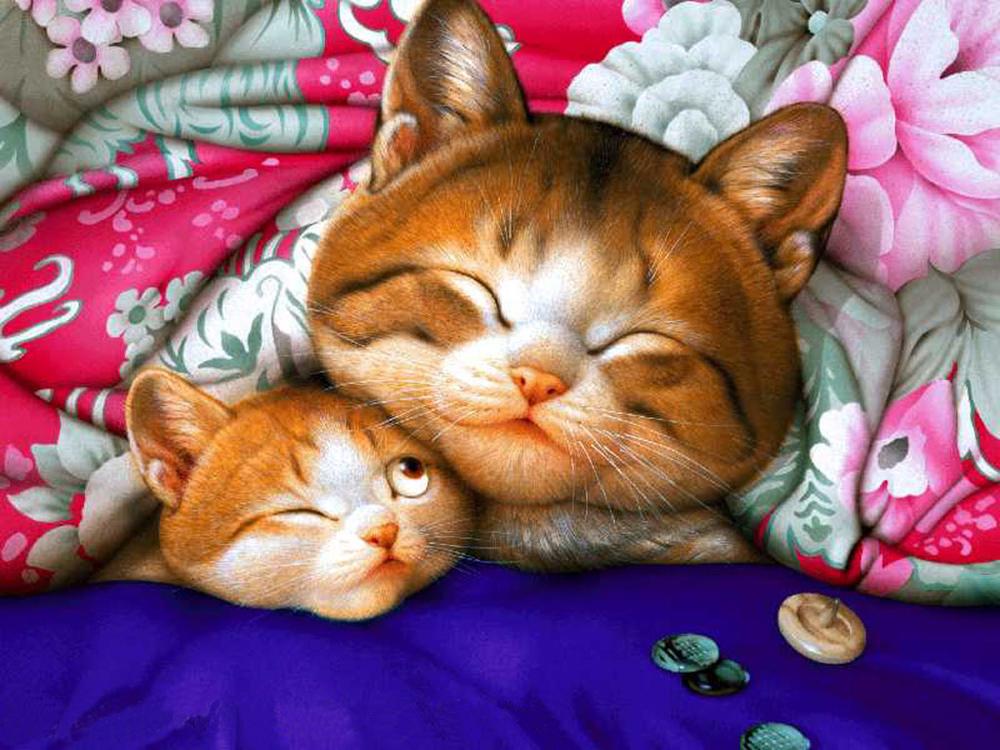 Картинки очаровательных котов