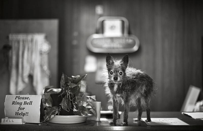 Джейк (16 лет) собаки, фото собак, фотографии животных