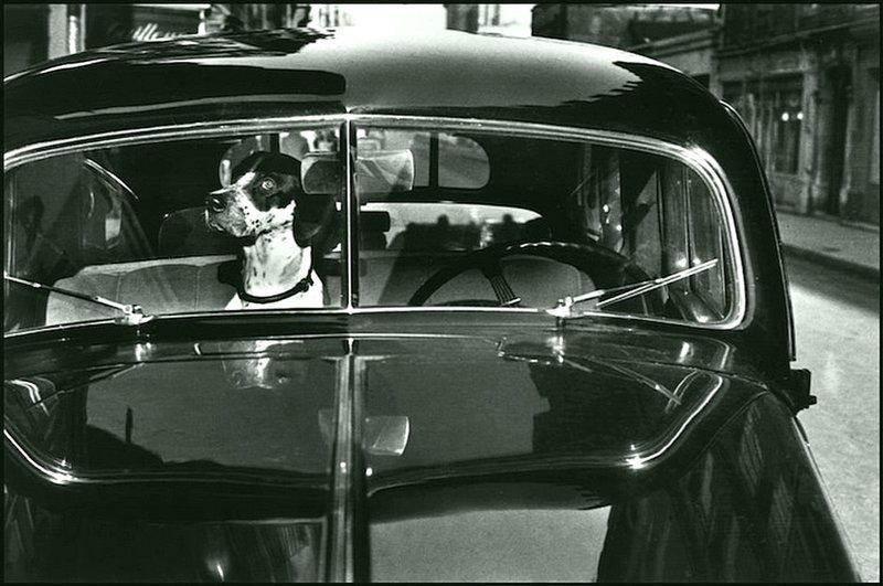 Эллиот Эрвитт - Париж 1951 Весь Мир в объективе, история, фотография