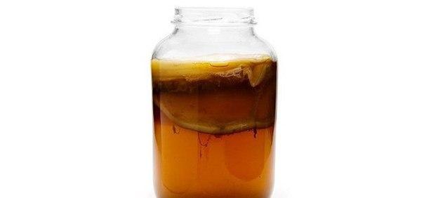 Как вырастить чайный гриб самостоятельно.  Выращивание гриба из черного чая