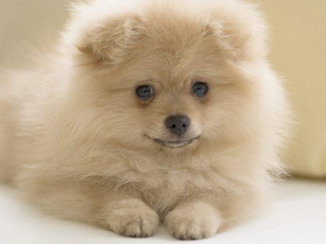 5 странностей в поведении собачек, которые вполне объяснимы