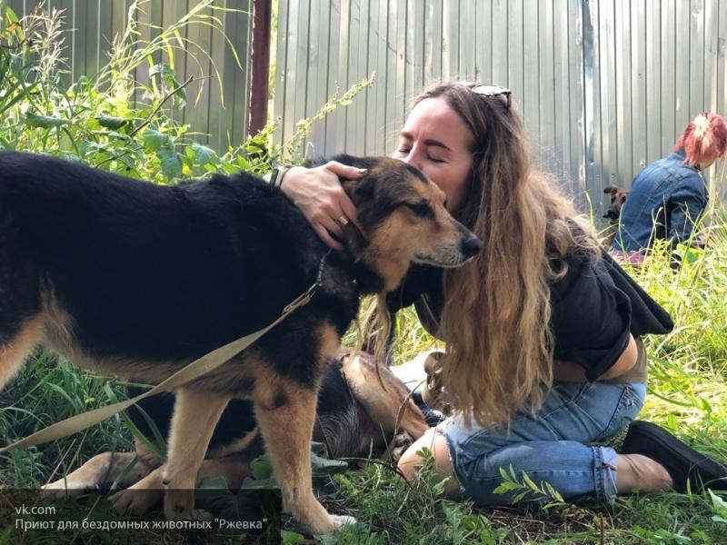 В Архангельске пройдет благотворительный концерт в помощь бездомным животным