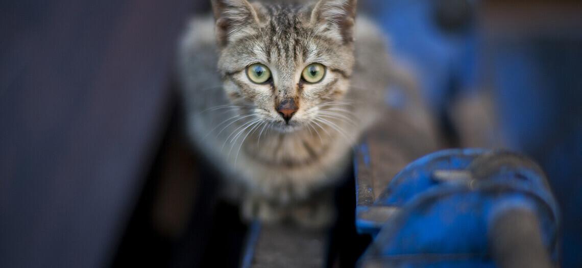 Острова кошек в Японии: удивительная земля, где котов в разы больше, чем людей