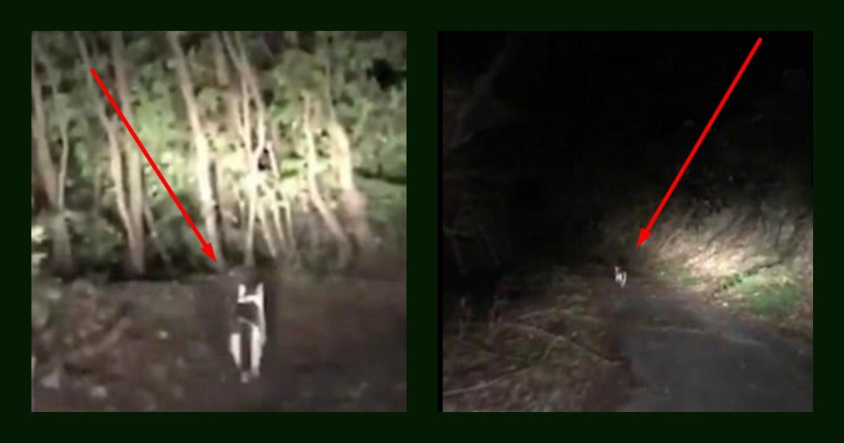 Потрясающий случай! Этот кот-призрак спас заблудившегося в ночи японского водителя