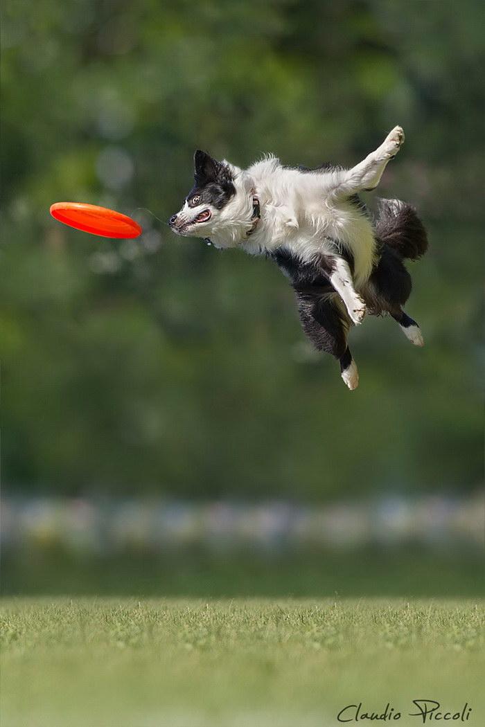 варианты летающие щенки картинки норковая повязка голову