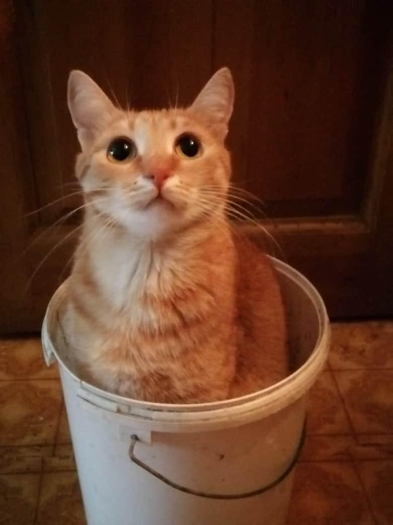 кот в ведре