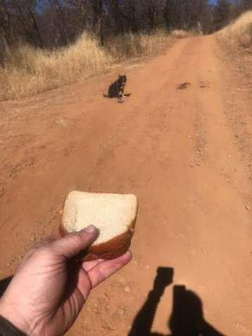История чудесного спасения: мужчина увидел собаку посреди дороги и не сразу понял, что она его куда-то зовёт (4 фото)