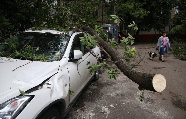 Ураган в Москве: число пострадавших приблизилось к 170