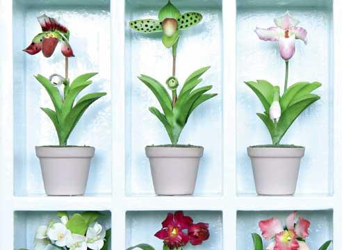 Сад, цветник и огород. Болезни и вредители орхидей