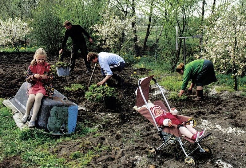 стивен смешные фото работы в огороде современном мире