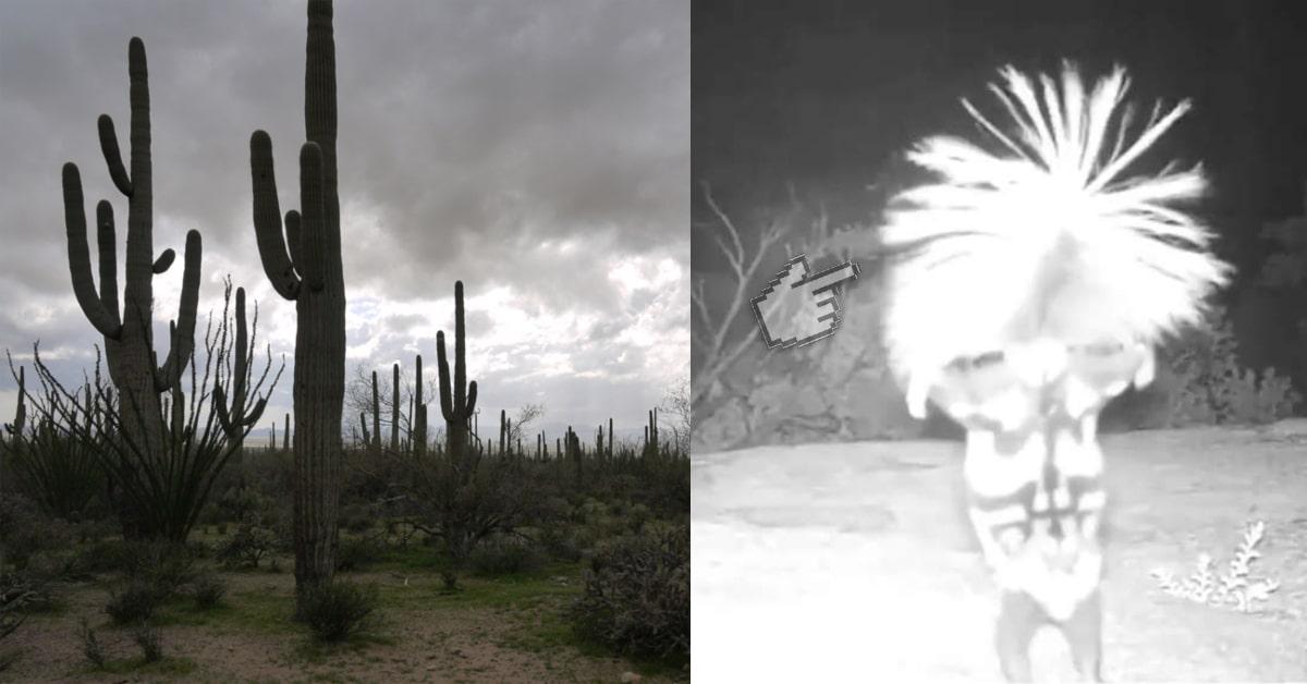 Ночная самба: скрытая камера сняла в лесу «танцовщицу» в парике. Но там у неё совсем не голова! :)