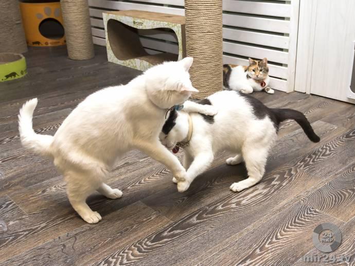 """Один день в котокафе """"Котики и люди"""""""