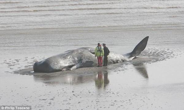 Печальный конец морского гиганта