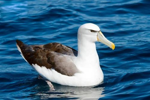Примерно 75% диких птиц живу…