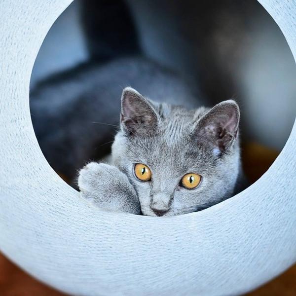 Тот случай, когда котик живет лучше вас