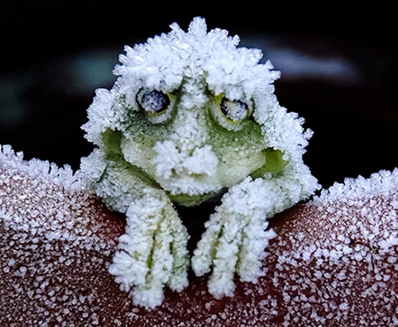 5. Замёрзшая лягушка. планета земля, удивительные фотографии, человек