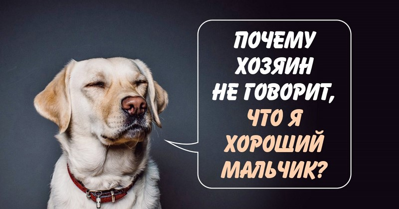 Почему у собак возникают про…