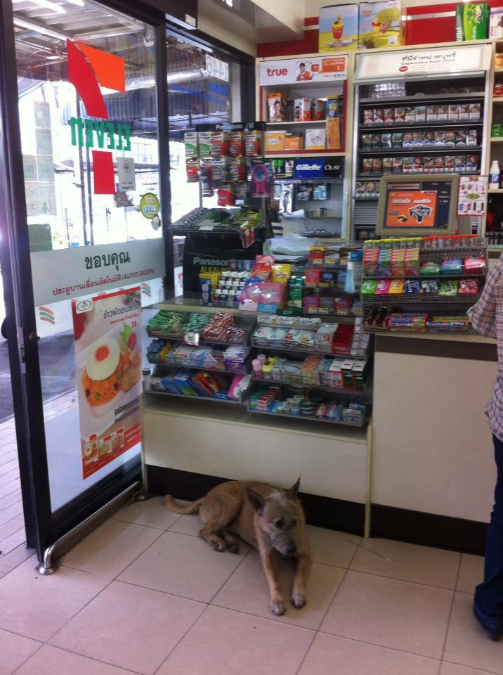 В Таиланде не закрывают двери магазинов, чтобы в жарищу как-то помочь песикам и котикам