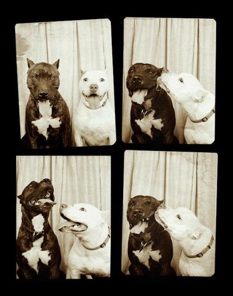 Вот что получится, если отправить собаку в фотобудку