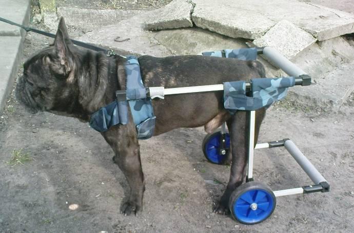Как сделать инвалидную коляску для собаки своими