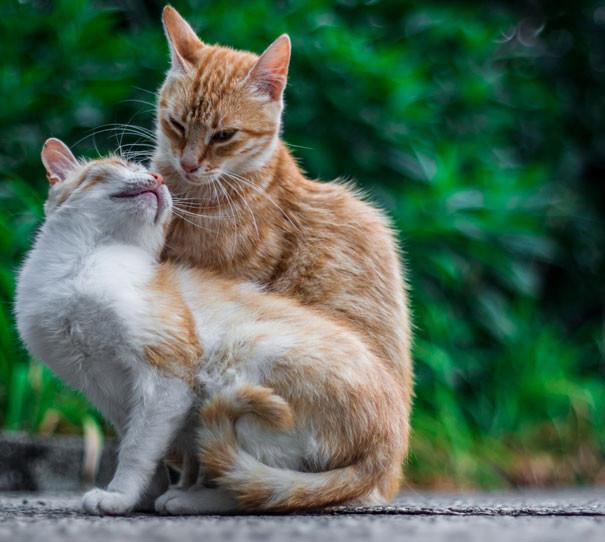 Красивые картинки кошки любовь