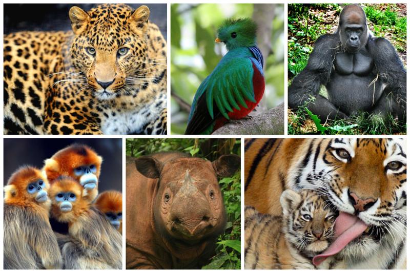 Исчезнувшие виды животных в россии фото