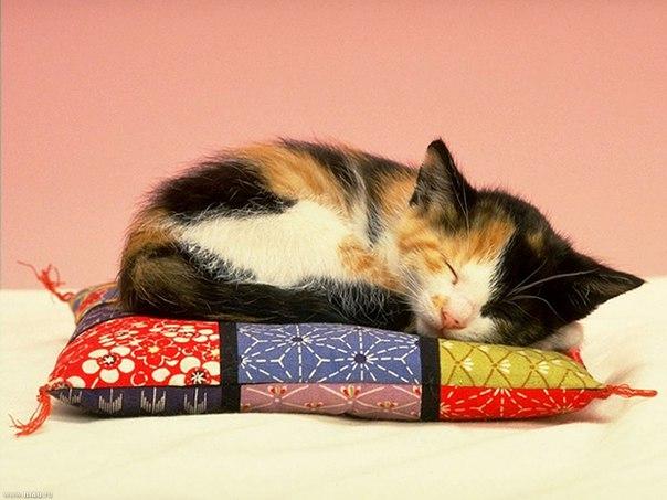 """,,Спит котёнок на подушке"""""""