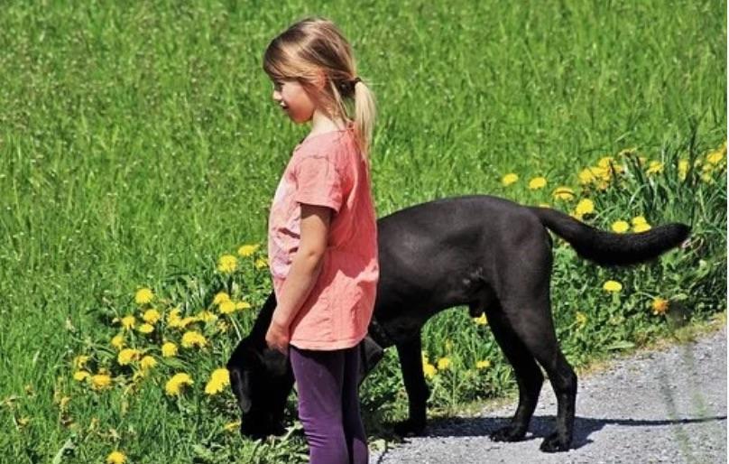 Оставлю все двоюродной племяннице, потому что сын и невестка не любят мою собаку