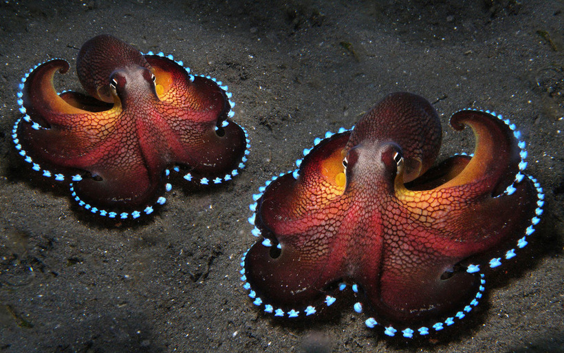Что произойдет, если посадить осьминога в банку и закрыть ее крышкой