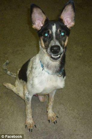 Любители животных сплотились, чтобы спасти жизнь собаке инвалиду. Борьба за жизнь Бобби...