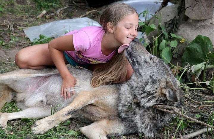 Волчья преданность, или в вольере с хищниками