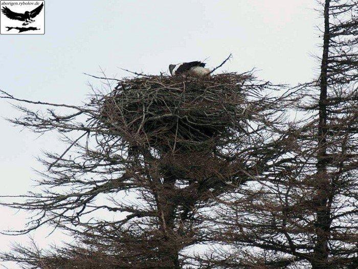 Умопомрочительная архитектура птичьих жилищ