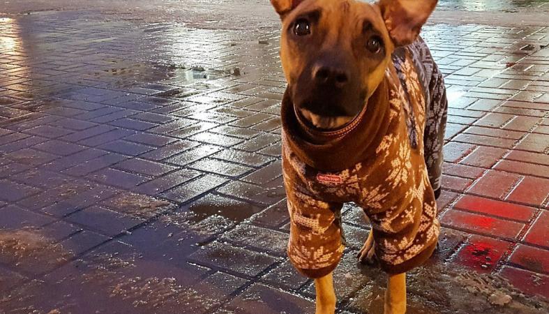 В Карелии обреченная на смерть собака сумела выжить и отправилась жить в Москву