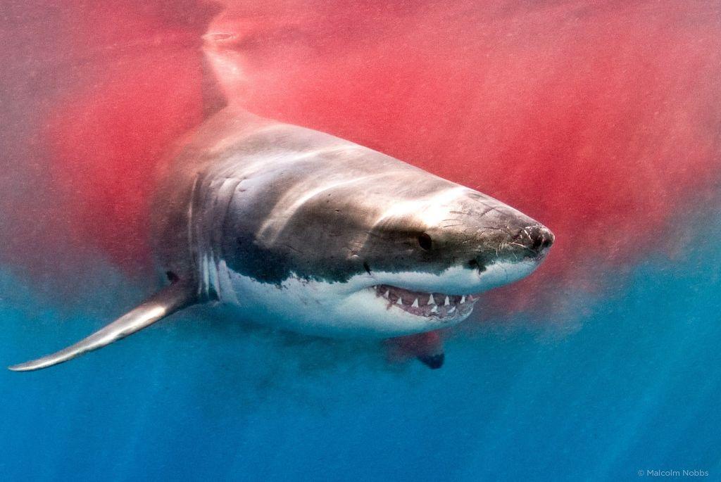Жуткие истории про акул