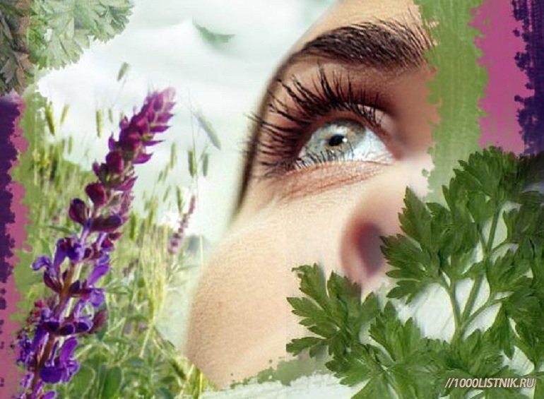 Очанка для глаз: способы лечения глазных заболеваний