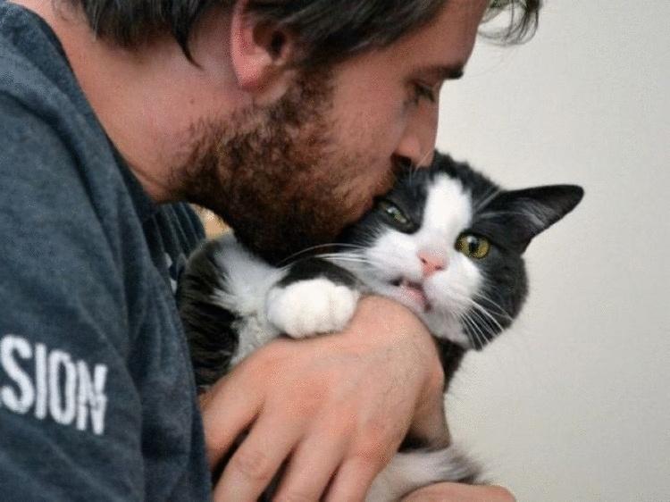 Днем, картинки смешные с кошками и людьми