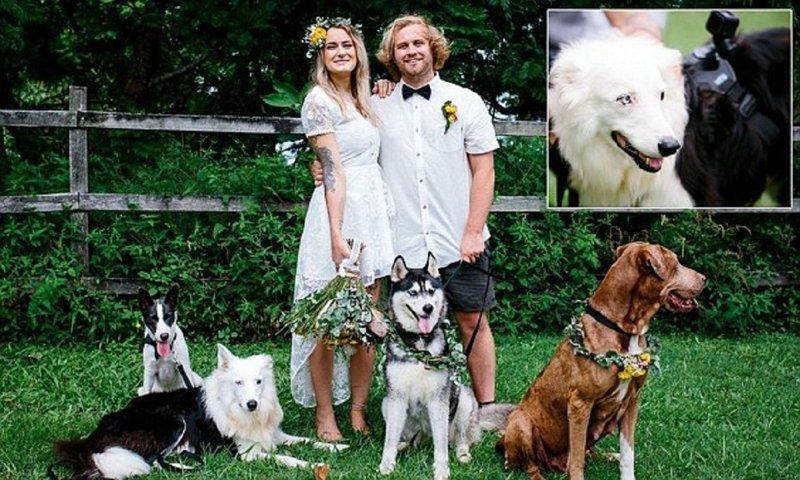 Собака-оператор сняла свадьбу хозяев
