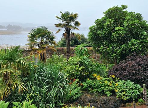 Что в странах далёких? Сад экзотических растений в Шотландии