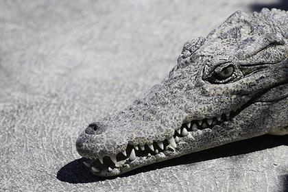 Обнаглевшие крокодилы выгнал…
