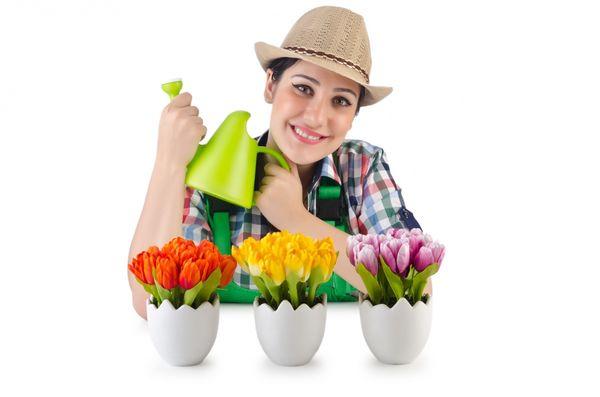 Как заставить тюльпаны цвести среди зимы
