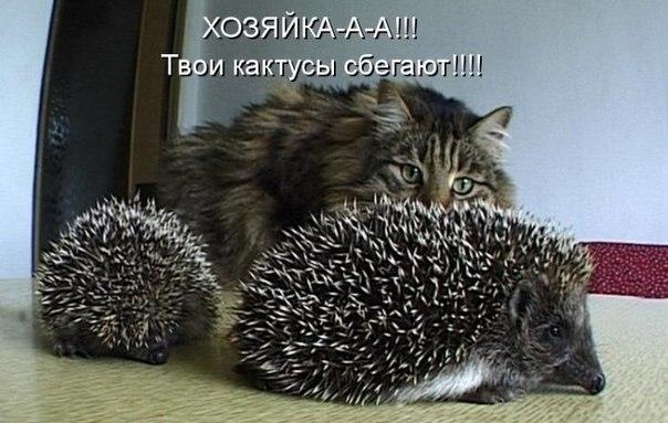 Молчать можешь? ;)))