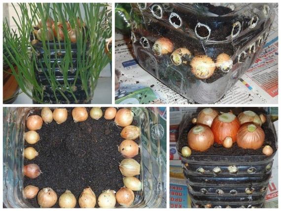 контейнер для лука из бутылки 5 л: Органическое земледелие, пермакультура