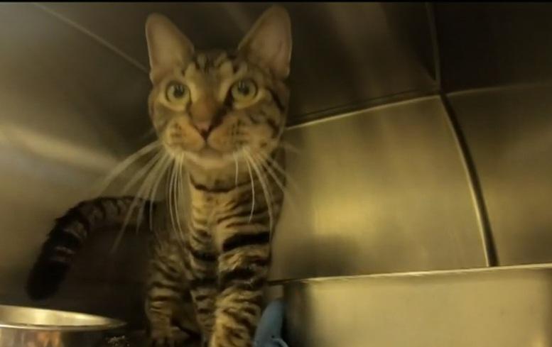«Они не могли дышать»: в багажнике был найден контейнер, а в нем — котики коты