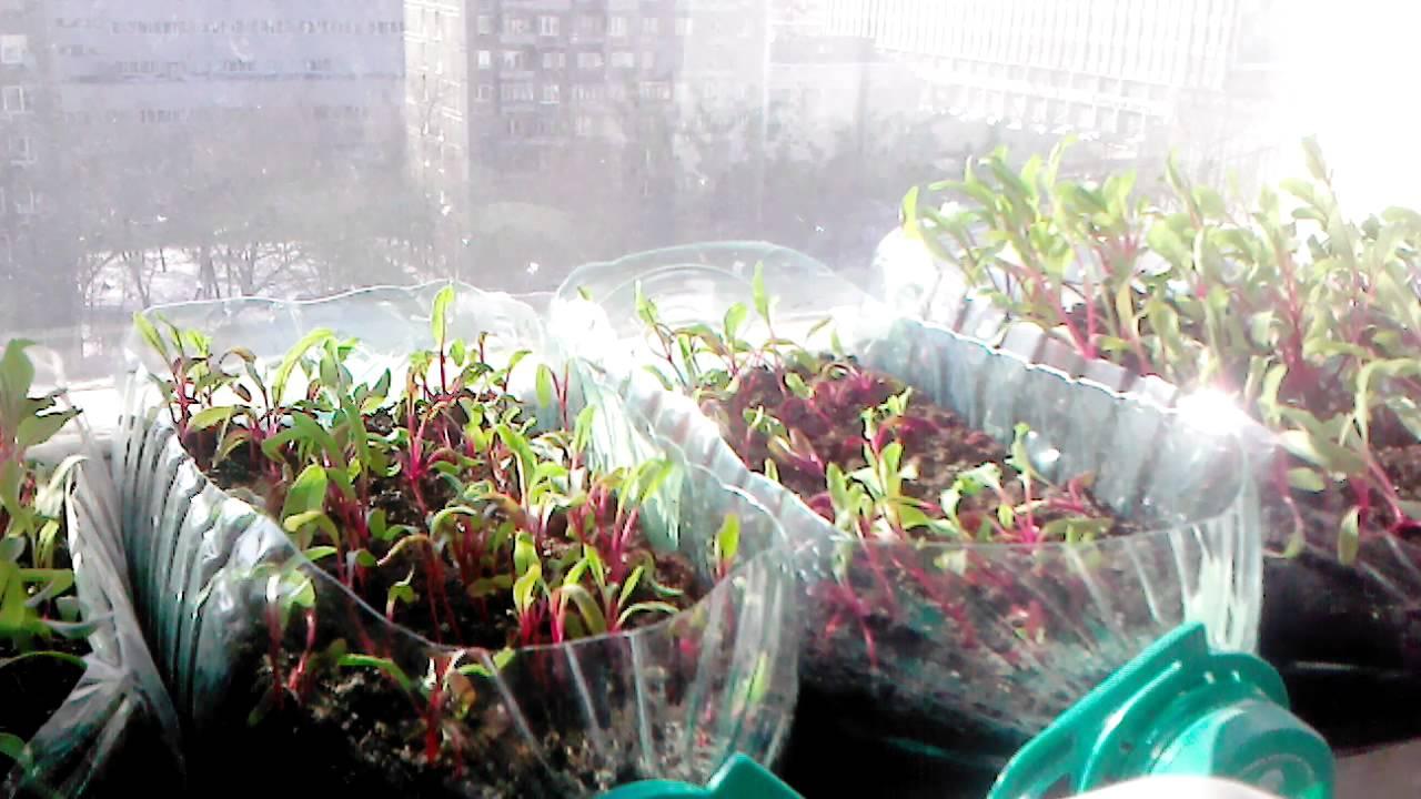 Как просто вырастить рассаду