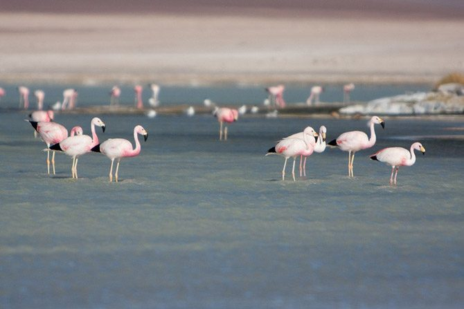 Экскурсия по солончаку Уюни фламинго, также, солончак, является, озера, солончаком, соляных, железной, покрывается, поверхность, После, солончака, дороги, Солончак, Благодаря, время, альпак, Рядом, рядом, блоков