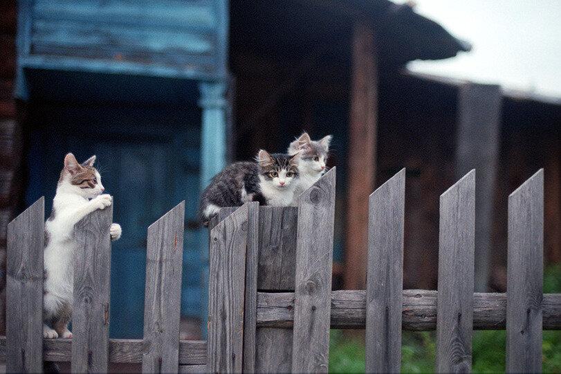 И понесли бабушке котят со всей деревни…
